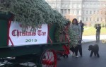 The First Lady Welcomes the Official White House Christmas Tree