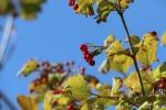 Kirkwood Nature Preserve