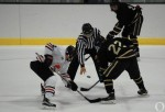 Ice Bulls eyeing playoffs in '16