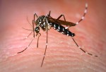 Zika: Misguided paranoia