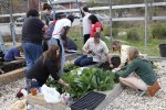 Community Garden Social reconnects with student organizations
