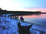 Campus Rec's horseback riding trip aims to de-stress