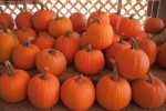 Hyde Park Village starts month-long pumpkin patch with fundraiser