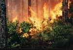 Forest fires across state not enough to raise eyebrows, officials still taking precautions