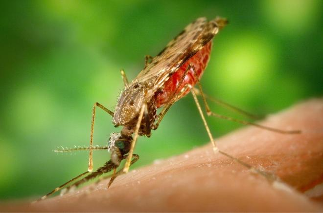 Yolo County Resident Tests Positive For Zika Virus