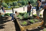 Urban Gardening: Self-Reliance to Combat Food Desert