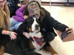 Therapy dogs bring students relief