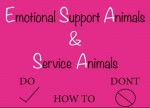 Emotional support animals: making the best decision