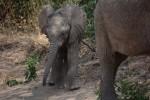 Mambo from Tanzania!