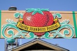 The Florida Strawberry Festival tastes sweeter than ever